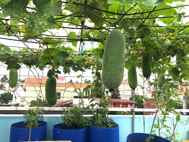 Bất ngờ với vườn rau trái đỉnh cao trên nóc nhà tại Đồng Nai - 13
