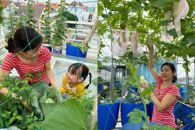 Bất ngờ với vườn rau trái đỉnh cao trên nóc nhà tại Đồng Nai - 15