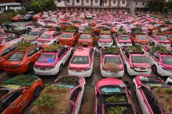 Hàng trăm xe taxi biến thành vườn rau mini ở Thái Lan - 1