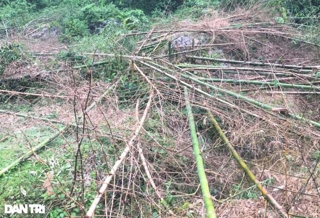 Chủ tịch tỉnh Hòa Bình chỉ đạo nóng vụ hộ dân bị nhiều người phá vườn cây - 2