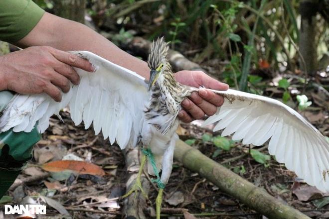 Thực hiện hơn 500 cuộc kiểm tra, truy quét nạn săn bắt chim trời - 3