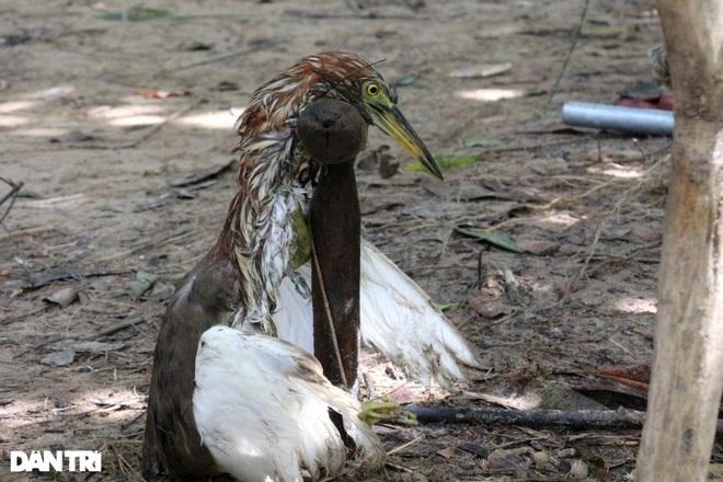 Thực hiện hơn 500 cuộc kiểm tra, truy quét nạn săn bắt chim trời - 1