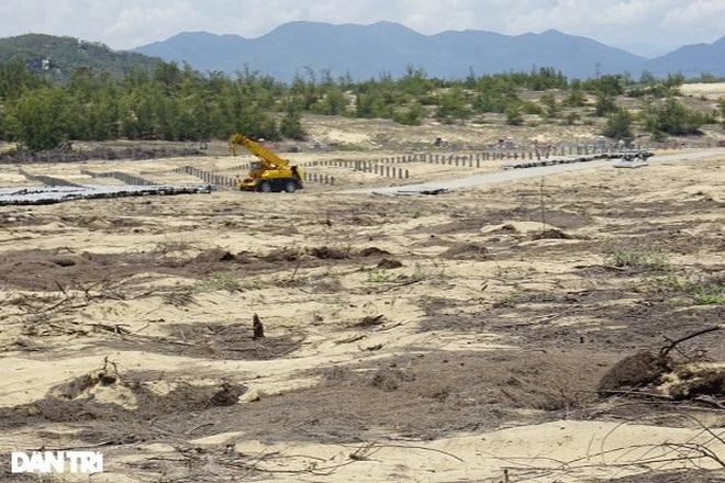 Bình Định giao Sở Tư pháp chủ trì xử lý vụ phá nhầm hơn 5 ha rừng - 1