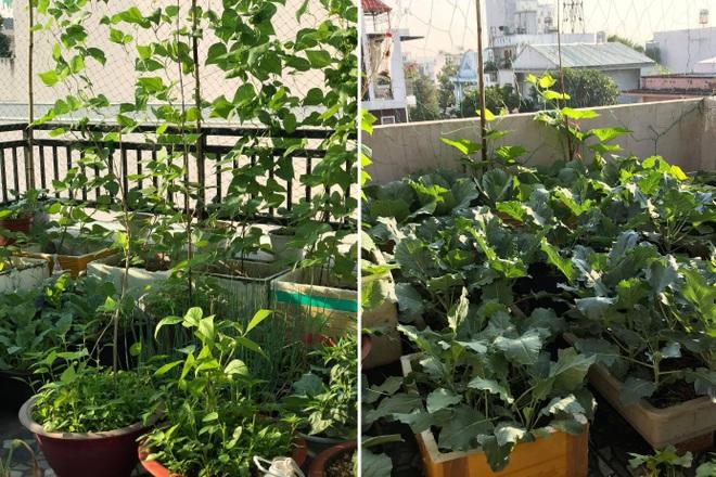 Vườn rau trái trồng trong thùng xốp xanh mướt, trĩu quả của cô giáo mầm non - 1
