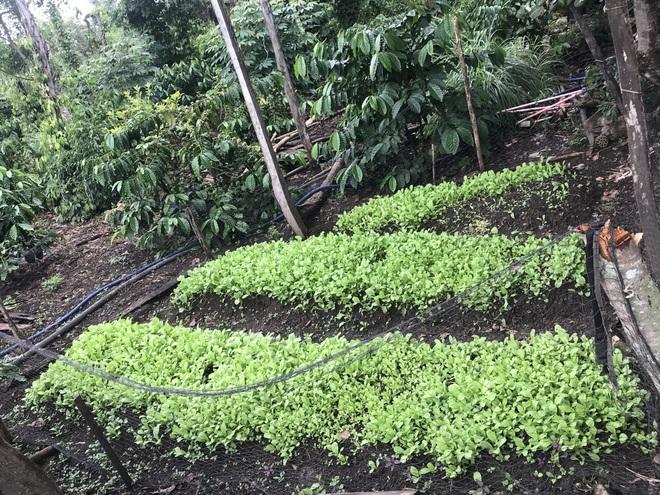 Gia đình Đắk Lắk làm vườn trái cây rộng 500m2 cho các con ăn thỏa thích - 12
