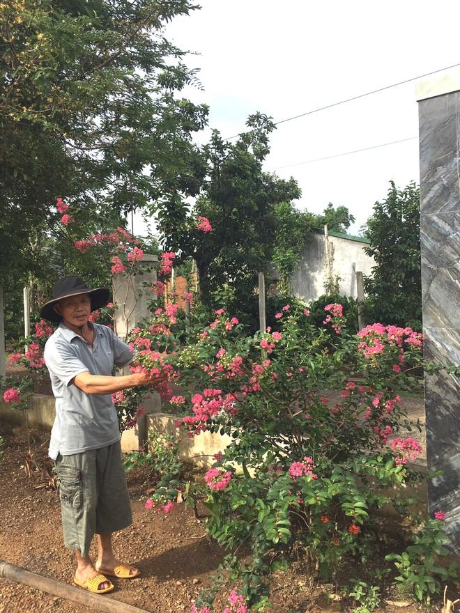 Gia đình Đắk Lắk làm vườn trái cây rộng 500m2 cho các con ăn thỏa thích - 1