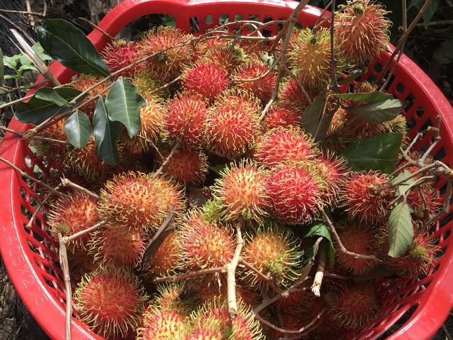 Gia đình Đắk Lắk làm vườn trái cây rộng 500m2 cho các con ăn thỏa thích - 11