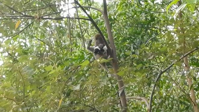 Clip: Gay cấn cảnh khỉ hoang bắt cóc... chó con và bỏ trốn - 1