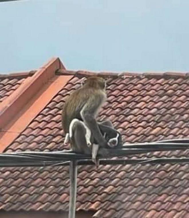 Clip: Gay cấn cảnh khỉ hoang bắt cóc... chó con và bỏ trốn - 2