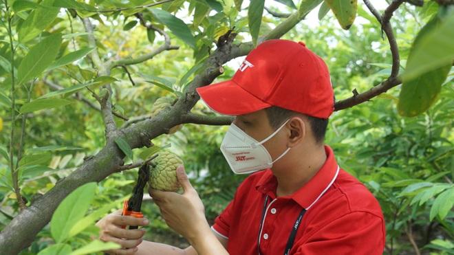 JT Express nối dài hành trình hỗ trợ tiêu thụ nông sản Việt - 2