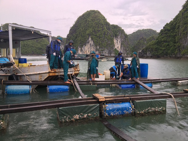 Hải Phòng tháo dỡ hơn 400 cơ sở nuôi trồng thủy sản tại Cát bà - 3