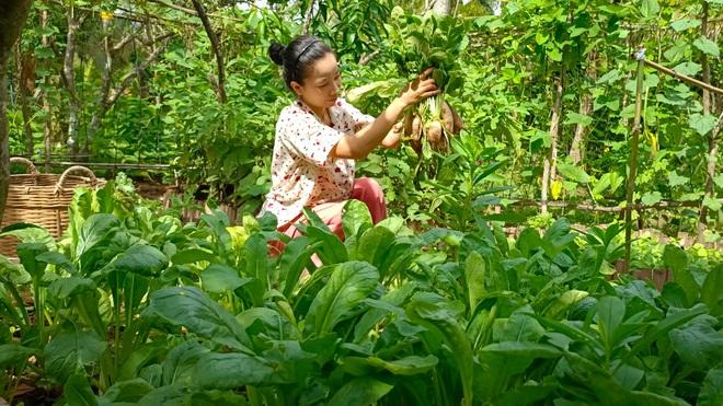 Bỏ phố về quê, cặp vợ chồng Bến Tre làm khu vườn 500m2 tràn ngập rau trái - 8