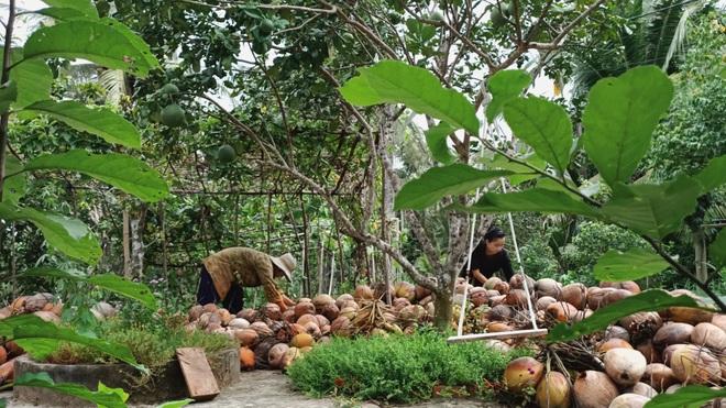 Bỏ phố về quê, cặp vợ chồng Bến Tre làm khu vườn 500m2 tràn ngập rau trái - 13