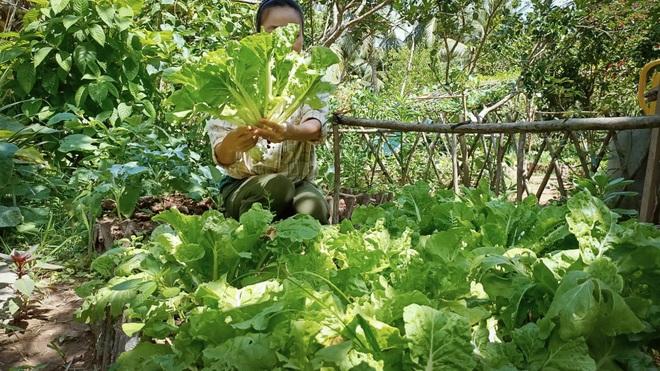 Bỏ phố về quê, cặp vợ chồng Bến Tre làm khu vườn 500m2 tràn ngập rau trái - 4