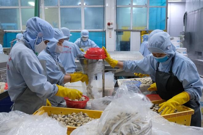 Nhiều doanh nghiệp mở rộng sản xuất, cơ hội cho hàng ngàn lao động - 1