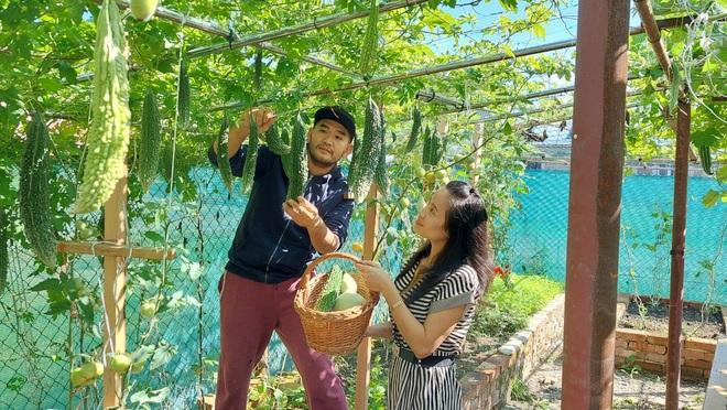 Giàn bí đao, mướp hương khủng của chàng Việt Kiều sống tại Cộng hòa Séc - 1