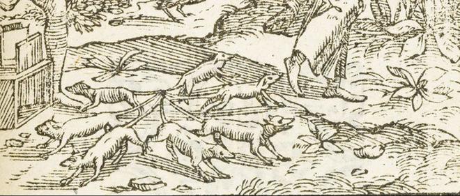 Phát hiện vua chuột trong truyền thuyết đầy kinh hãi - 2