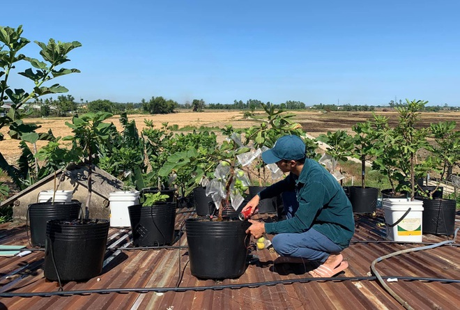 Nhiếp ảnh gia bê đất lên mái tôn, trồng vườn sung Mỹ 130 giống khác nhau - 4