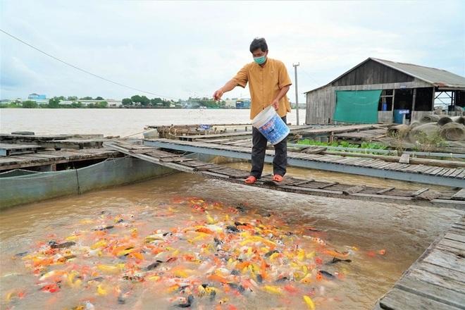 Lão nông Cần Thơ giàu lên nhờ cá thát lát và thủy quái trên sông - 1
