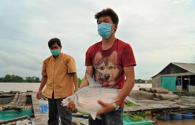 Lão nông Cần Thơ giàu lên nhờ cá thát lát và thủy quái trên sông - 3
