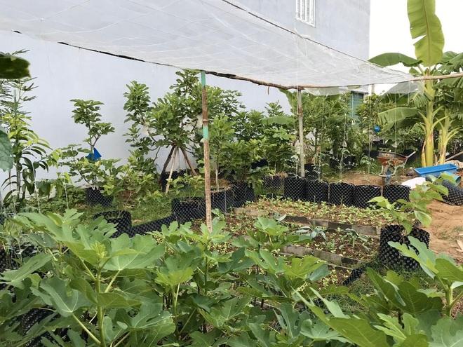 Mượn đất đồng nghiệp, vợ chồng ở Đà Nẵng làm vườn trái cây trăm gốc - 1