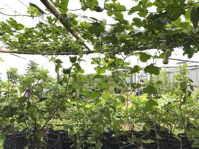 Mượn đất đồng nghiệp, vợ chồng ở Đà Nẵng làm vườn trái cây trăm gốc - 2