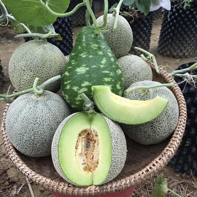 Mượn đất đồng nghiệp, vợ chồng ở Đà Nẵng làm vườn trái cây trăm gốc - 6