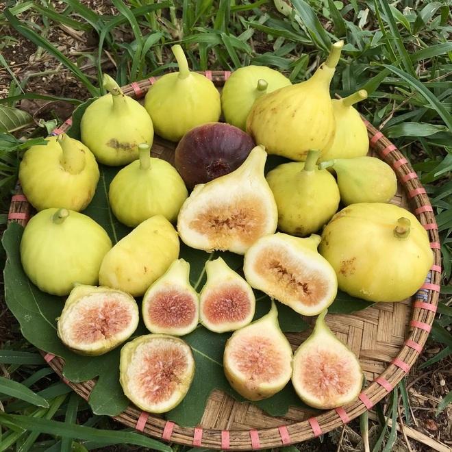 Mượn đất đồng nghiệp, vợ chồng ở Đà Nẵng làm vườn trái cây trăm gốc - 12
