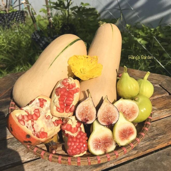 Mượn đất đồng nghiệp, vợ chồng ở Đà Nẵng làm vườn trái cây trăm gốc - 15