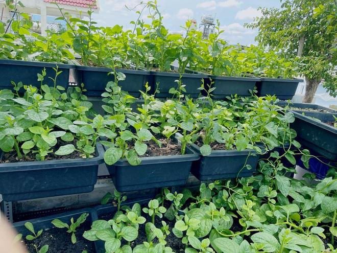 Chi gần chục triệu đồng, mẹ đảm ở TPHCM làm vườn sum suê trên sân thượng - 8