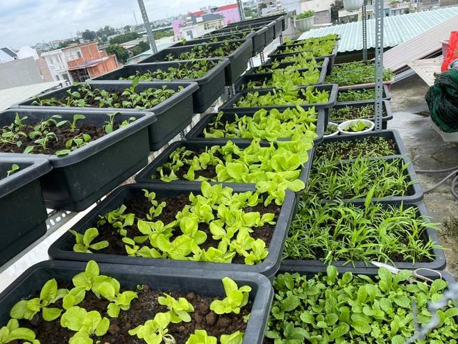 Chi gần chục triệu đồng, mẹ đảm ở TPHCM làm vườn sum suê trên sân thượng - 2