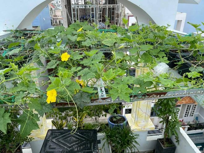 Chi gần chục triệu đồng, mẹ đảm ở TPHCM làm vườn sum suê trên sân thượng - 5