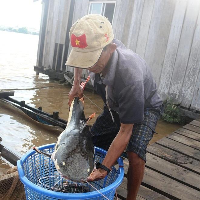 Lão nông Cần Thơ giàu lên nhờ cá thát lát và thủy quái trên sông - 5