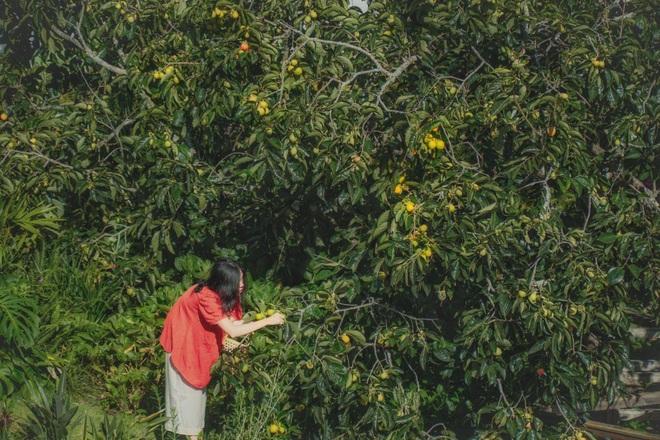 Vườn hồng trĩu quả giữa Đà Lạt của vợ chồng bỏ phố về núi - 14