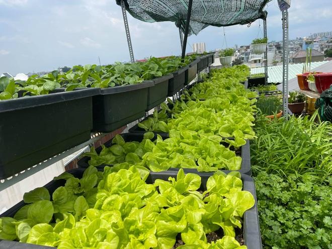 Chi gần chục triệu đồng, mẹ đảm ở TPHCM làm vườn sum suê trên sân thượng - 1