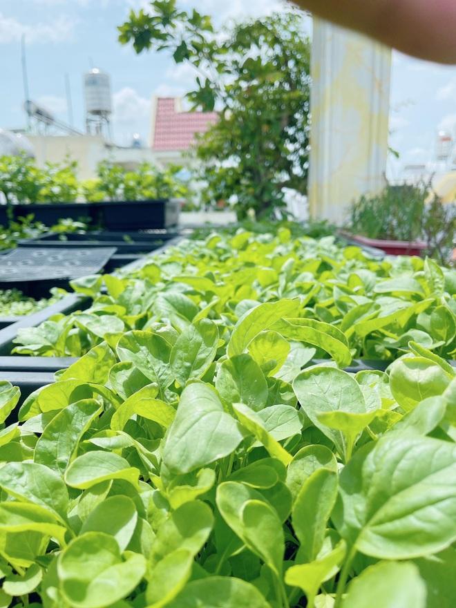 Chi gần chục triệu đồng, mẹ đảm ở TPHCM làm vườn sum suê trên sân thượng - 3