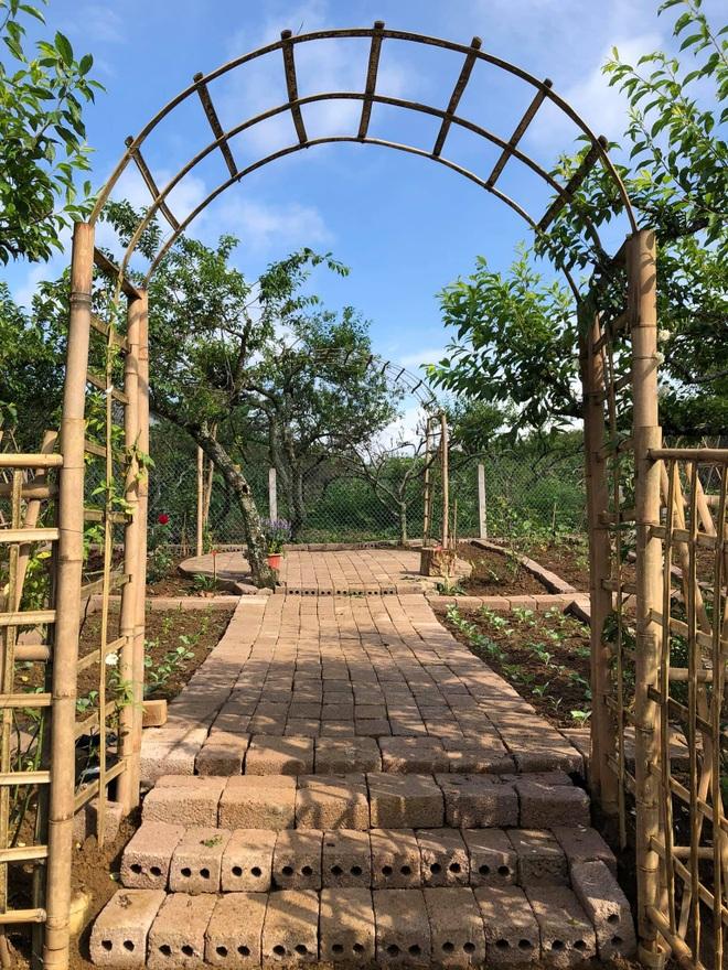 Mắc kẹt ở Mộc Châu do Hà Nội giãn cách, gia đình làm vườn đẹp mê - 4