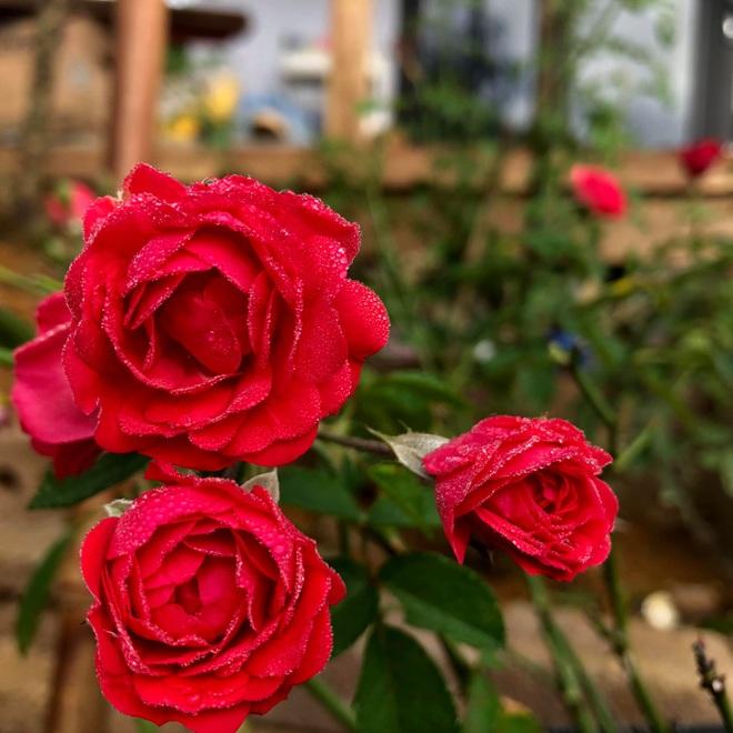 Mắc kẹt ở Mộc Châu do Hà Nội giãn cách, gia đình làm vườn đẹp mê - 6