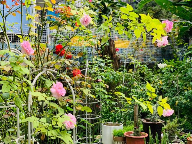 Giảng viên về hưu làm vườn nhiệt đới, trồng hoa hồng tặng vợ ở TPHCM - 7