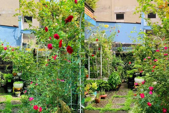 Giảng viên về hưu làm vườn nhiệt đới, trồng hoa hồng tặng vợ ở TPHCM - 6