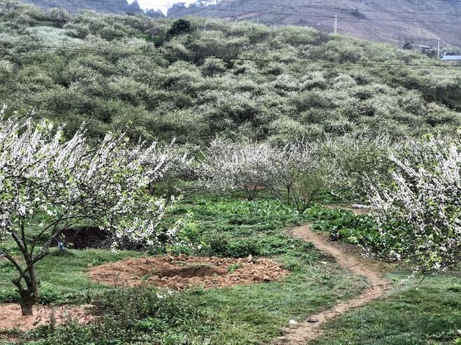 Mắc kẹt ở Mộc Châu do Hà Nội giãn cách, gia đình làm vườn đẹp mê - 2