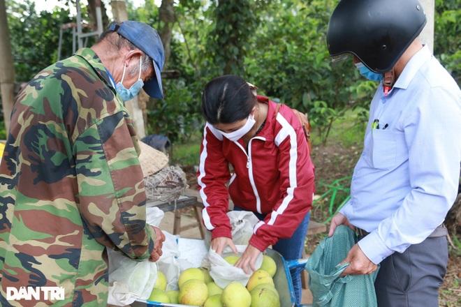 Nông dân khốn khổ tìm đầu ra cho hàng trăm tấn cam đặc sản - 5