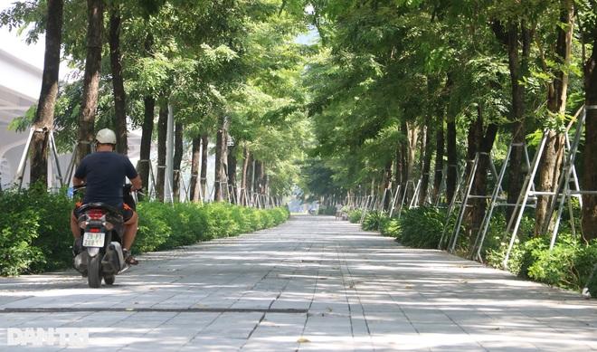 Cận cảnh gông cùm siết chặt hàng cây xanh đang tuổi lớn trên đường Hà Nội - 5