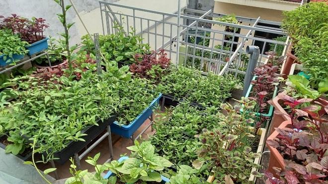 Gia đình làm vườn rau trên không xanh mướt nhờ rác thải nhà bếp - 1