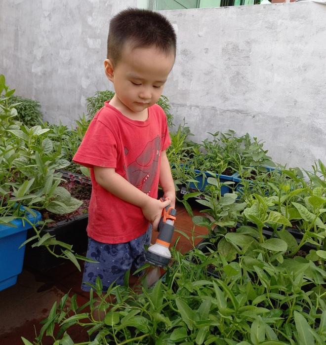 Gia đình làm vườn rau trên không xanh mướt nhờ rác thải nhà bếp - 6