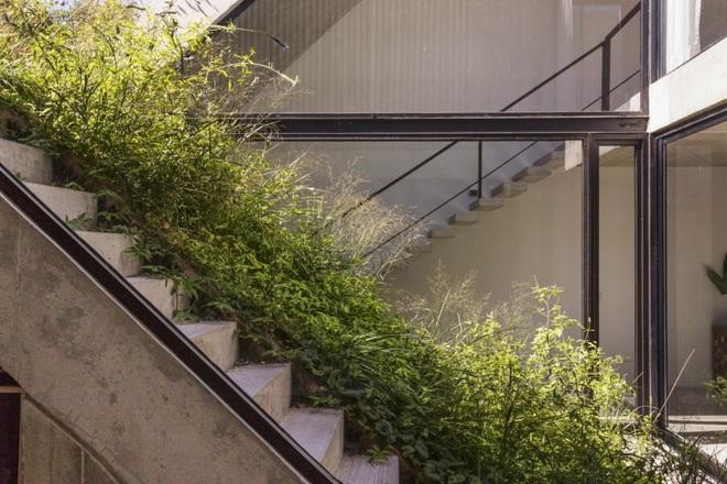 Nhà phố xanh mướt với sân vườn liên hoàn nối 3 tầng - 5