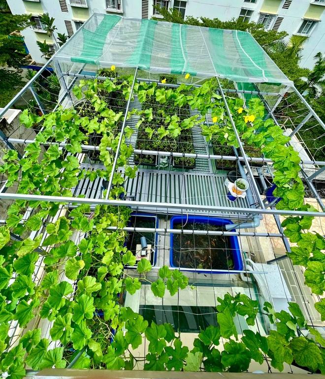 Vườn trồng rau, nuôi cá tươi sống trên sân thượng ở TPHCM - 3