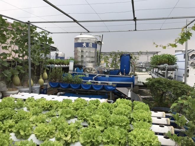Vườn trồng rau, nuôi cá tươi sống trên sân thượng ở TPHCM - 12