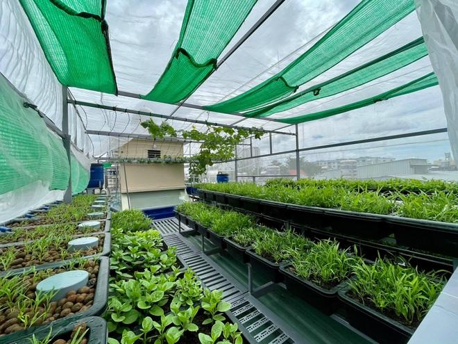 Vườn trồng rau, nuôi cá tươi sống trên sân thượng ở TPHCM - 2