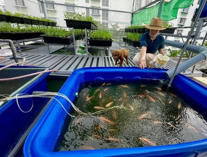 Vườn trồng rau, nuôi cá tươi sống trên sân thượng ở TPHCM - 4